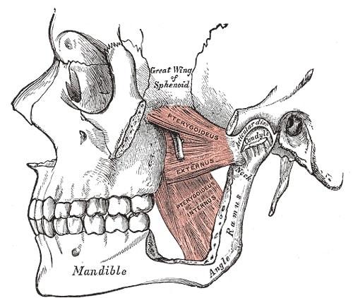 Temporomandibular Joint